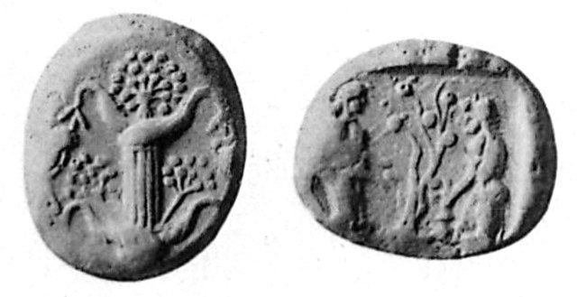 Cyrene silphium